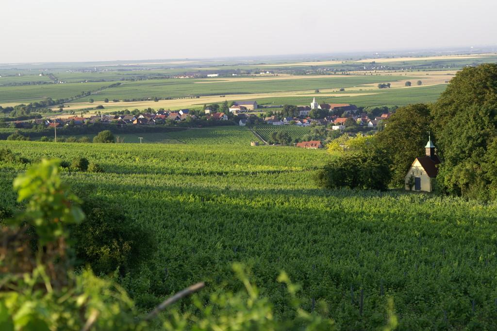 Sonnenwinzer Weinberg